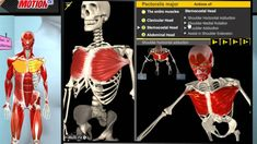 Muscle and Motion - Anatomy of the Muscular System