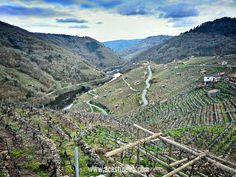 Viñedos infinitos sobre la ribera del Miño en Belesar #RibeiraSacra #Galicia #Spain