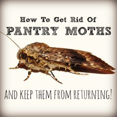 Here's how to get rid of pantry moths that have infested your food and then keep them from coming back without resorting to toxic chemicals. Household Cleaning Tips, Cleaning Recipes, House Cleaning Tips, Cleaning Hacks, Household Bugs, Cleaning Lists, Household Cleaners, Cleaning Supplies, Moths In House