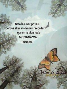 〽️Las mariposas hacen recordar que en la vida todo se transforma siempre...