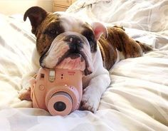 """""""Who let the #instax dogs out! WOOF, WOOF, WOOF, WOOF!"""" 🐕…   Flickr Instax Film, Instax Camera, Instax Mini 90, Fujifilm Instax Mini, Instax Share, Instant Print Camera, Zuko, Love Valentines, French Bulldog"""