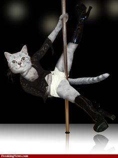 Pole Dance Cat