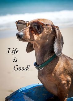 LIfe Is Good! #dogquotes