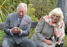 5 NOV: Britain's Prince Charles Prince of Wales and Camilla Duchess of Cornwall react as the Prince handles a tuatara during a visit to the Orokonui Ecosanctuary in Dunedin New Zealand. The Royal couple are on a 12-day tour visiting seven regions in New Zealand. They will also travel to Australia where they will meet new Prime Minister Malcolm Turnbull a vocal republican. PHOTO: Gerard OBrien / Getty Images #BBCSnapshot #Photojournalism #Royals #RoyalTour #NewZealand #Australia…