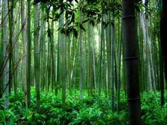 ▶ Trail of the Angels - Bamboo Flute Chinese Music ( Xiao ) - YouTube