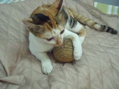 This is a simple project, it only need few pieces of cardboard and glue. Your cat will love this cardboard toy.