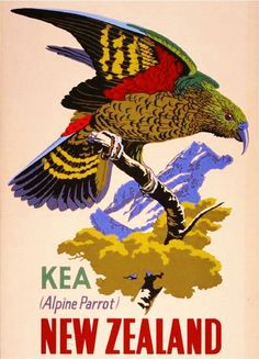 New Zealand Kea Alpine Parrot Bird Vintage Travel Advertisement Art Poster New Zealand Art, New Zealand Travel, Retro Poster, Poster Vintage, Tourism Poster, Nz Art, Bird Poster, Kunst Poster, Kiwiana