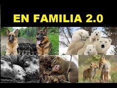 50 increíbles Imagenes de animales en familia, Special.