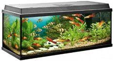 správny tvar akvária