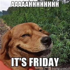 dogweedfarm - Aaaaahhhhhhhh It's Friday