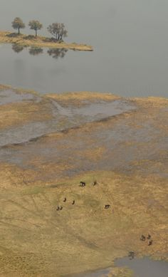 Experience Chobe in a different way with helicopter flights over Chobe and the Flood plains of the Zambezi/Chobe river system. Visit us on www.pyruseagles.com or www.facebook.com/Pyruseagles. A member of Africa Safari Camps, www.africasafaricamps.com.