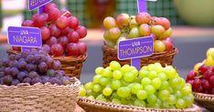 Uva controla a pressão arterial, é anticâncer e antienvelhecimento