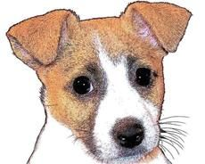 Dog With Small Triangle Ears Down