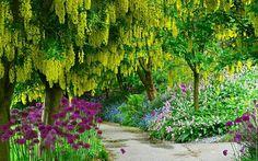 Spring Park Wide Desktop Background Wallpaper Free