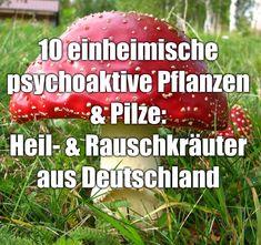 10 einheimische psychoaktive Pflanzen & Pilze – Rausch- und Heilpflanzen aus Deutschland & Österreich