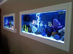 An aquarium is a pleasing method of displaying that you just love nature and that you have a must cope with it. A home aquarium is likely one of the Aquarium Terrarium, Home Aquarium, Aquarium Fish Tank, Aquarium In Wall, Saltwater Fish Tanks, Saltwater Aquarium, Freshwater Aquarium, Aquarium Design, Finding Nemo Fish Tank