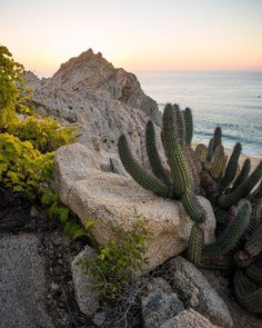 Cactus a sunrise and the Pacific Ocean