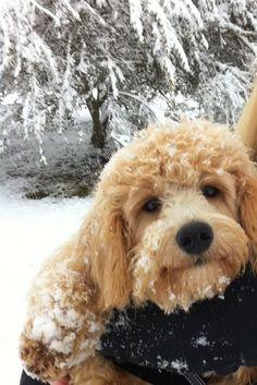 Norman loves snow