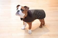 Barbour Wax Dog Coat!  http://www.countryattire.com/barbour-wax-dog-coat-olive-uac0005ol71-a1101.html