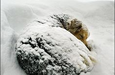 Create an emergency animal protection ordinance, requiring all animals have more than basic shelter during unusually cold weather. Animals w...