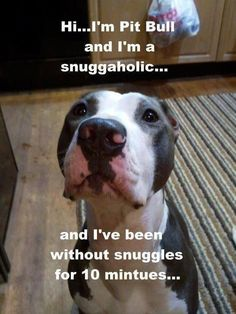 someone pwease snuggle this cute wittle baby! #PitBullMemes