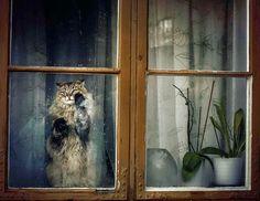 19 melancólicos gatos miran por la ventana esperando a que sus dueños regresen