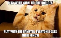 Nothing like some good old fashion funny cat memes to ease outta the BLAH zone. Cat memes were mankind's first example of artwork Cute Animals With Funny Captions, Funny Cute Cats, Funny Animal Pictures, Funny Cat Photos, Funny Pictures With Captions, Funniest Cat Memes, Funny Animal Memes, Funny Memes, Memes Humor