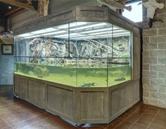 """Exhibit """"Riverbank Water Snakes""""-Exhibit """"Riverbank Water Snakes"""" Special Designed Aquarium with Background fully encloses to house large species of Fish and Water Snakes. Aquarium Terrarium, Reptile Terrarium, Home Aquarium, Nature Aquarium, Aquarium Design, Aquarium Fish Tank, Wall Aquarium, Aquarium Ideas, Reptile Habitat"""