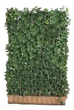 Efeu Hecke (12 Stück) - H 180 x B 120 cm - | Sichtschutz | Fertighecke | Efeu in Garten & Terrasse, Gartenzäune & Sichtschutzwände, Sicht- & Lärmschutzwände | eBay!