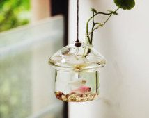 Unique mushroomhouse style aquarium terrarium//hanging underwater living//mini glass fish bowl// home decoration//office desk decor