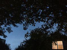 Leaves of my tree
