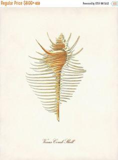Flash Sale - Murex Shell Print, Seashell Poster, Nautical Art, Shell Art Print, Beach Home Wall Decor, Coastal Living, Wall Art, Beach Art,