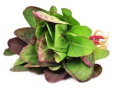 Health Benefits of Orach | Organic Facts- Some of the health benefits of orach include its ability to regulate digestion, improve kidney health, boost cardiovascular strength, aids the immune system, detoxifies the blood, and can prevent certain cancers and chronic diseases.