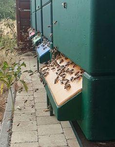 Insect Hotel, Bee Farm, Backyard Beekeeping, Backyard Bar, Bee Design, Busy Bee, Bee Keeping, Survival Guide, Livestock