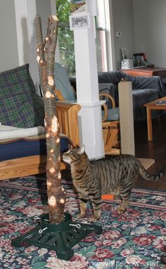 Christmas Tree For Cat Owners | Cute Cats