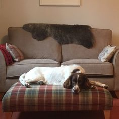 This time Jen Burt's dog Bramble is being the perfect model resting on the footstool while Jen takes a picture of our sheepskin looking fabulous draped over the back of her sofa. Thanks for the great pics, Jen. Perfect Model, Bramble, Fans, Take That, Sofa, Animals, Settee, Animales, Animaux