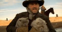 Cowboys Herding Cats May Just Be The Funniest Commercial You've Never Seen. - Herds of cats in the wild, who knew this was a thing? I Love Cats, Cute Cats, Funny Cats, Cat Fun, Grumpy Cats, Funny Minion, Funny Animals, Cat Safe Plants, Serval Cats