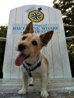 Fido is always welcome in the outdoor seating areas of many restaurants at Destin's Baytowne Wharf.