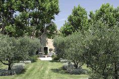 Jouer à cache-cache dans un jardin d'oliviers - St. Remy-de-Provence (cotemaison.fr)