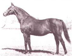 Dr Tivios Goldnugget Quarter Horse- Chimney Sweep
