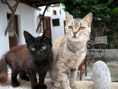 Mykonos Cats | Flickr - Photo Sharing!