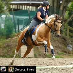 VIP Entry from @morgs_innes - 🐴🐴To be in the draw to be the Ultimate VIP at the Camp Directors Fair next Wed (11th Jan) use the hashtags #CampAmericaHireMe #iamCAVIP #campamericaNZ in a photo of you demonstrating one of your skills for Camp America.