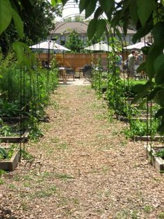 The Garden Cafe. Delicious and literally garden fresh food. Brunch heaven and on the same street as one of my besties, Lisa R. Good stuff.