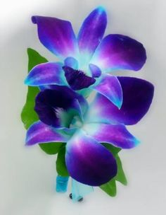 Renning's Flowers Blue Orchid Boutonniere Rochester, MN, 55901 FTD Florist Flower and Gift Delivery Indoor Orchids, Artificial Orchids, Orchids Garden, Purple Garden, Orchid Boutonniere, Orchid Bouquet, Small Wedding Bouquets, Wedding Flowers, Blue Orchid Tattoo