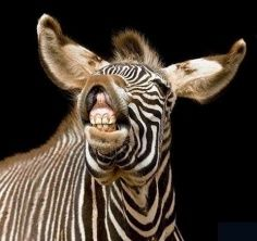For more cute animal smiles like us on Facebook: https://www.facebook.com/TriStateFamilyDentistry