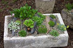 We made a slate crevice trough garden using unglazed slate tiles that were leftover from an indoor flooring project. Garden Troughs, Garden Pots, Vegetable Garden, Garden Ideas, Broken Pot Garden, Slate Garden, Alpine Garden, Wild Ginger, Porch Garden