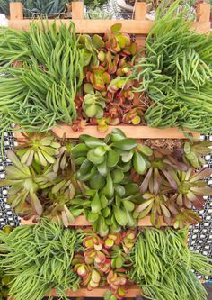 Succulent wall frame.