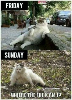 Really dont like cats but cat humor is pretty funny. Funny Cartoons, Funny Memes, Cat Memes, Humor Animal, Animal Memes, Justin Bieber Jokes, Funny Animals, Cute Animals, Funniest Animals