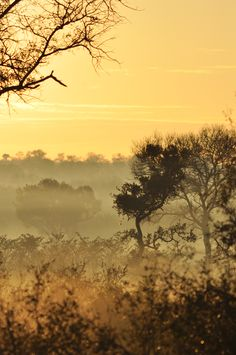 Dawn at Kruger Park, South Africa, by me
