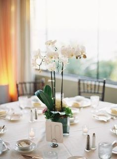 Potted Orchids Reception Centerpiece   photography by http://www.patmoyerweddings.com/: